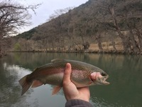 Guadalupe River Fishing Report 03/21/2017