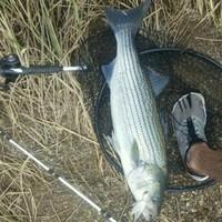 Possum Kingdom Lake Fishing Report 06/24/2016
