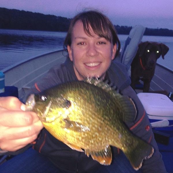 Pumpkinseed sunfish greenwood lake mn fishingscout for Lake greenwood fishing report