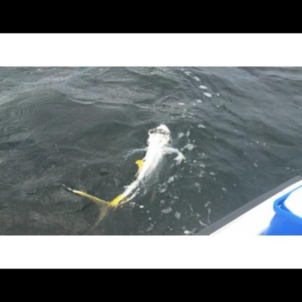 Jack crevalle matagorda bay complex other tx for Matagorda bay fishing report
