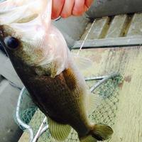 Coleto Creek Reservoir Fishing Report 05/15/2015