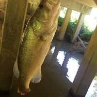 Neches River Fishing Report 10/14/2016