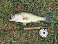 Lake Pflugerville Fishing Report 07/09/2017