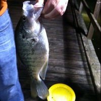 Lake Bob Sandlin Fishing Report 06/17/2013