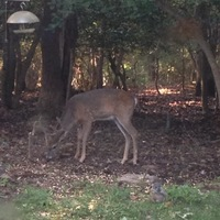 Buncombe County Hunting Report 09/04/2017