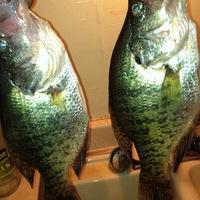Wright Patman Lake Fishing Report 04/29/2013