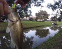 Bessies Creek Fishing Report 10/02/2015