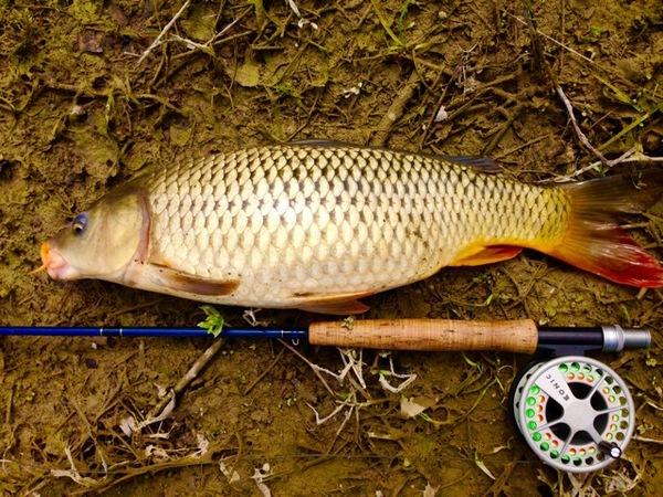 Cibolo Creek Fishing Report 03/02/2016