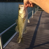 Friendswood Ponds Fishing Report 09/10/2017