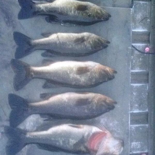 Bite alert lake jackson tallahassee fl fishingscout for Jackson lake fishing report