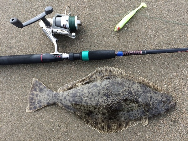 Halibut san francisco bay ca fishingscout for Sfbay fishing report