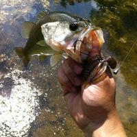 Harvey Lake Fishing Report 05/22/2014