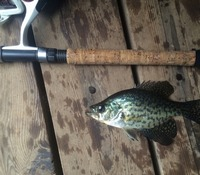 West Lakes Fishing Club Fishing Report 04/03/2015