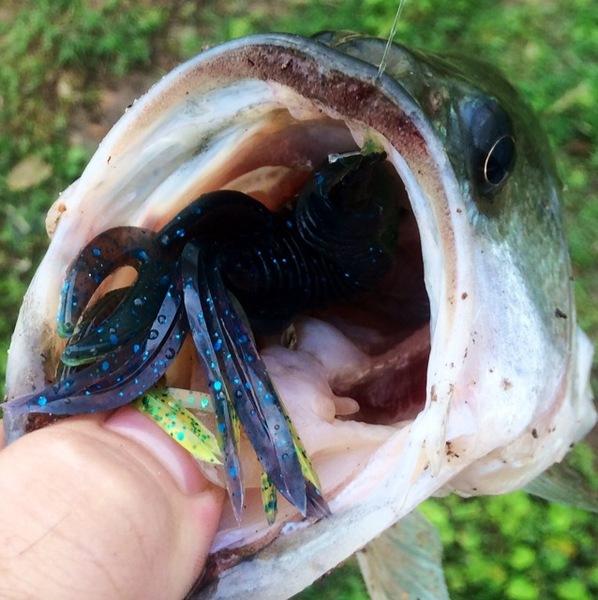 Cuero Ponds Fishing Report 04/23/2015