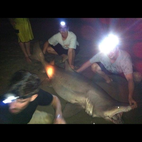 Other shark delaware bay de nj fishingscout for Delaware bay fishing report