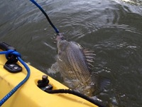 Nueces River Fishing Report 02/19/2016