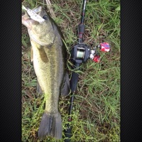 Lake Monticello Fishing Report 05/29/2014