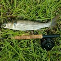 Brays Bayou Fishing Report 06/17/2017