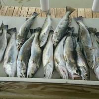Matagorda Bay Fishing Report 08/13/2016