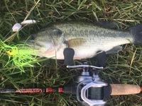 George Bush Park Ponds Fishing Report 06/06/2017