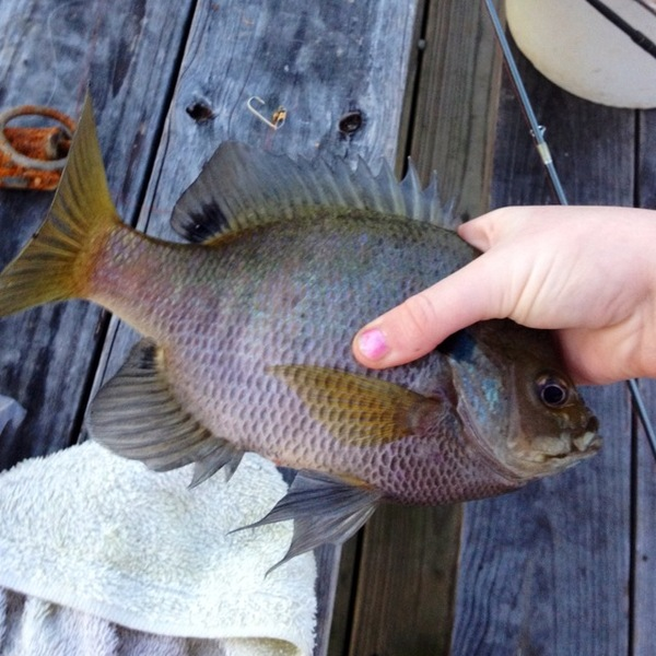 Foster lake fishing reports fishingscout mobile app for Ross barnett fishing report