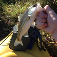 Waterloo Lake Fishing Report 03/28/2014