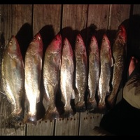 Lake Austin (Bay City) Fishing Report 06/26/2014