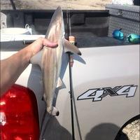 San Luis Pass Fishing Report 05/20/2012