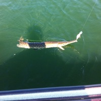 Kurth Lake Fishing Report 05/13/2013