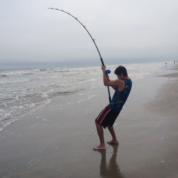 Bull shark galveston bay tx fishingscout for Galveston fishing report