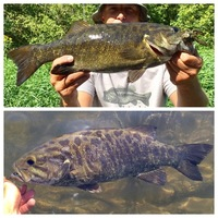 DuPage River Fishing Report 08/24/2017