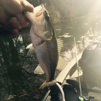 Lake New Ingram  Fishing Report 02/16/2015