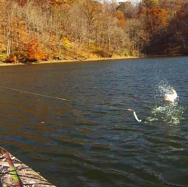 Cheat River Fishing Report 11/21/2014