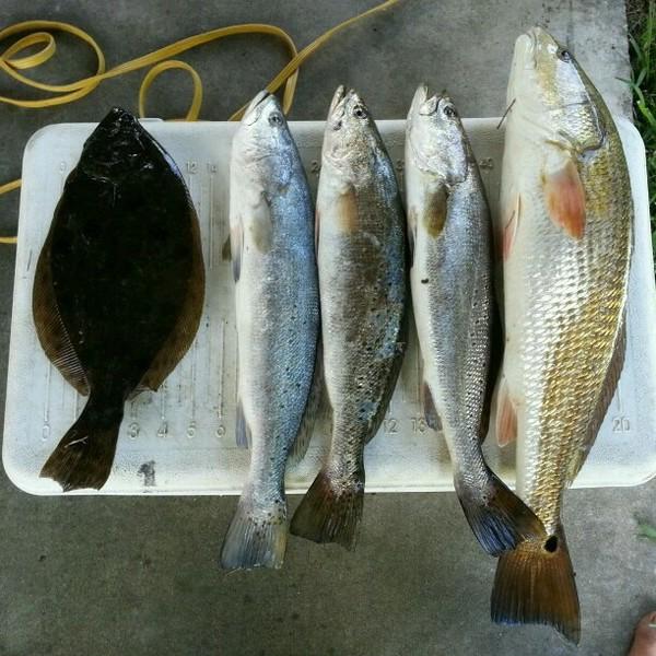 Bessie Heights Marsh Fishing Report 09/01/2014