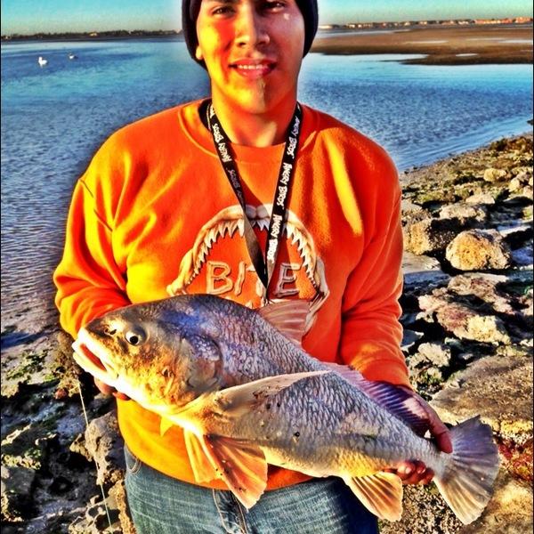 Black drum corpus christi bay tx fishingscout for Fishing report corpus christi texas