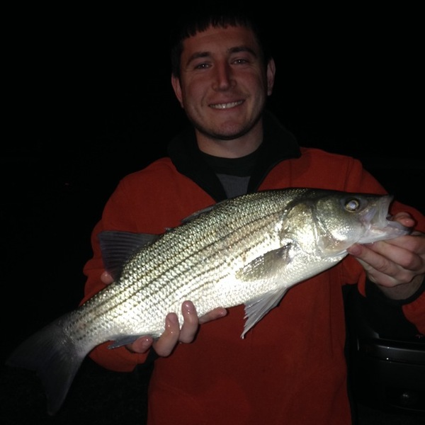 Striped bass ohio river oh ky wv fishingscout for Crappie fishing ohio
