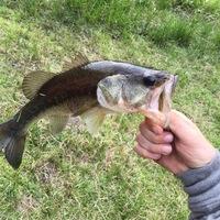 Lake Livingston Fishing Report 06/09/2016
