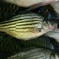 Angelina River Fishing Report 03/28/2015