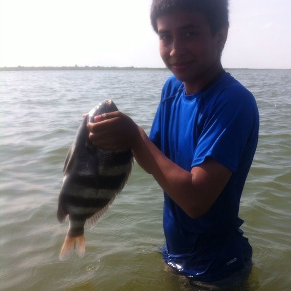 Sheepshead galveston bay tx fishingscout for Galveston fishing reports