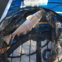 Chorpus Christi Bay  Fishing Report 08/23/2015