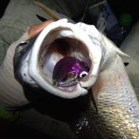 Bastrop Bay Fishing Report 11/29/2014