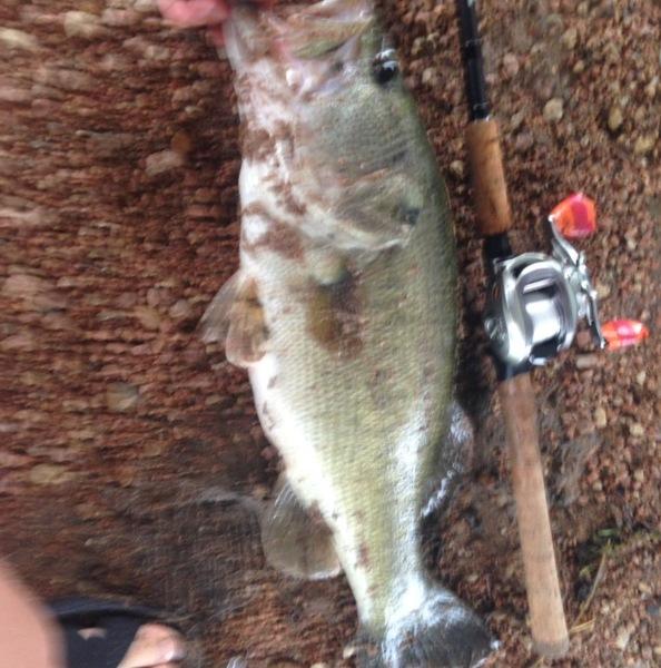 Lady Bird Lake Fishing Report 05/27/2016