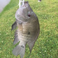 Friendswood Ponds Fishing Report 05/21/2017