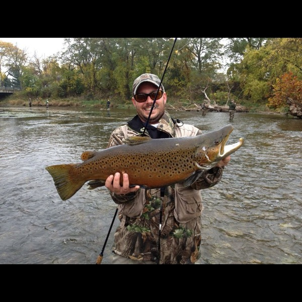 brown trout oak orchard river ny fishingscout