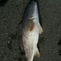 Sabine River Fishing Report 11/10/2015