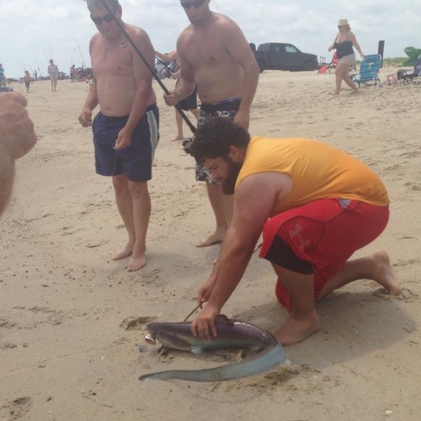 Thresher shark delaware bay de nj fishingscout for Delaware bay fishing report
