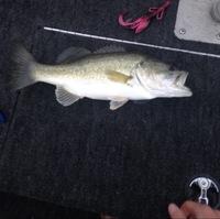 Lake Nasworthy Fishing Report 04/14/2016
