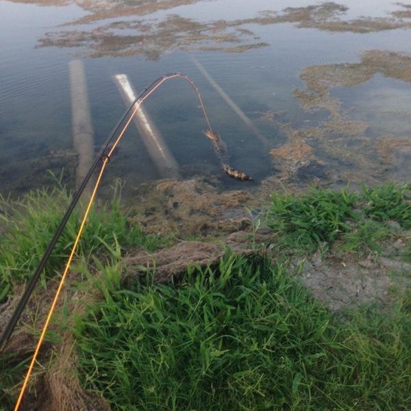 Alligator lake corpus christi tx fishingscout for Fishing report corpus christi texas