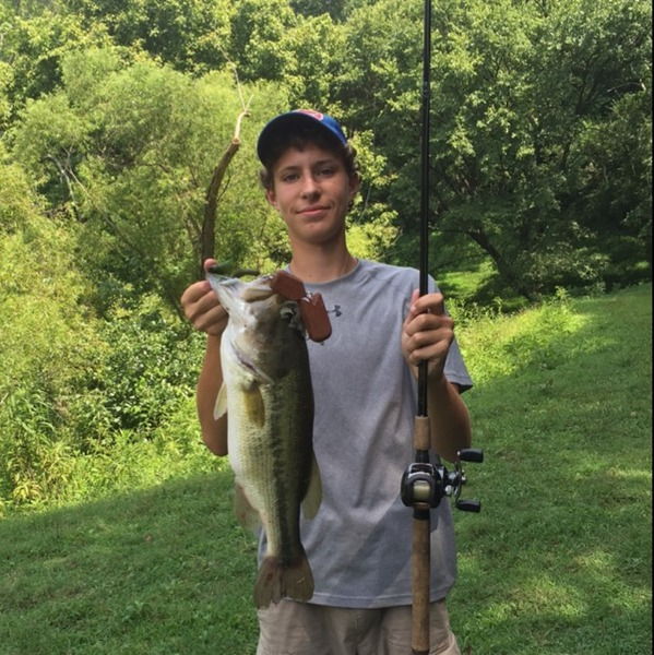 Largemouth bass other freshwater tn fishingscout for Whitakers fishing report