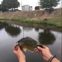 Saltgrass Spillway (near Costco and Bryant Irvin Rd) Fishing Report 02/09/2016